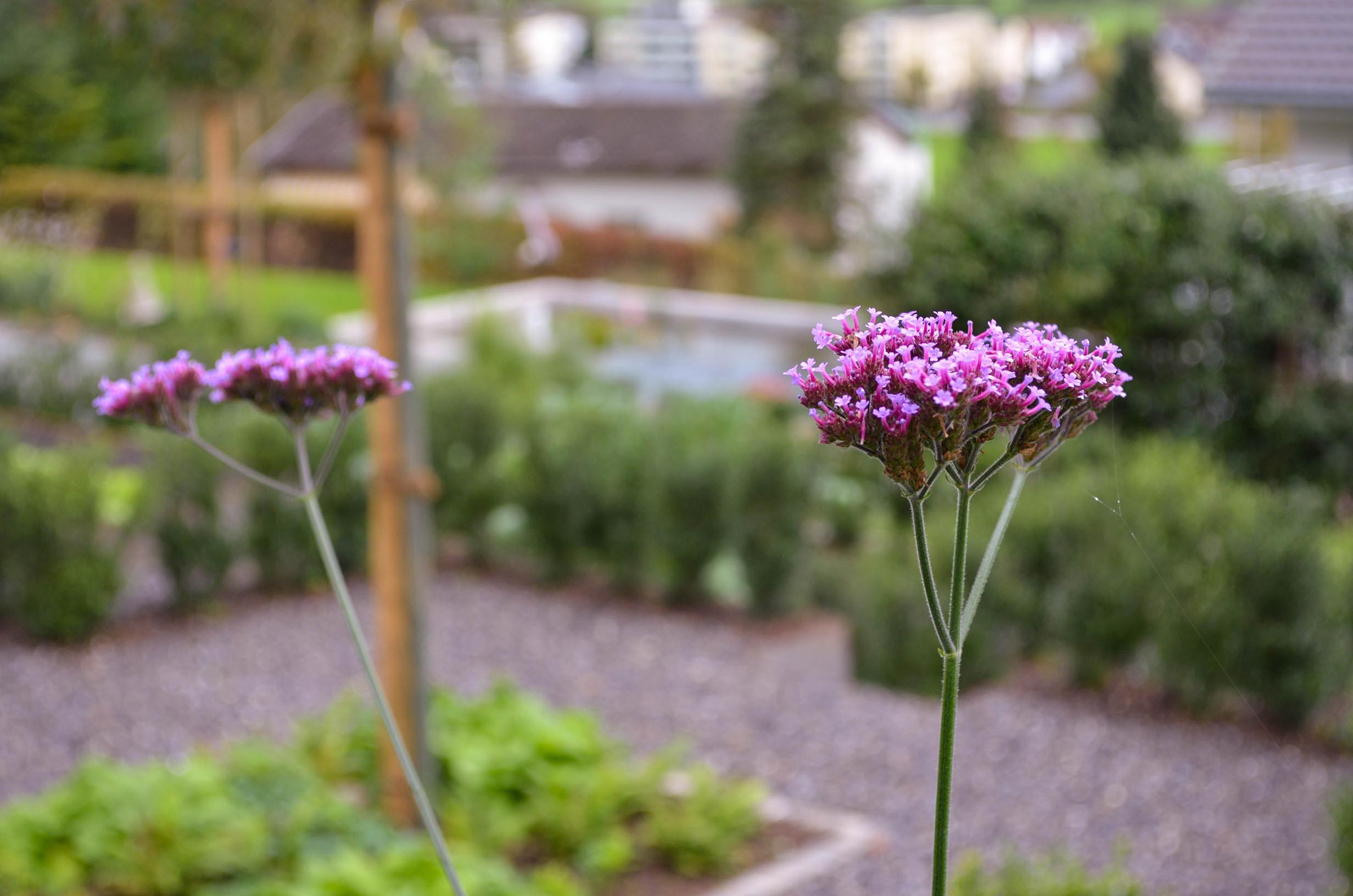 Gartenoase in Buochs 14