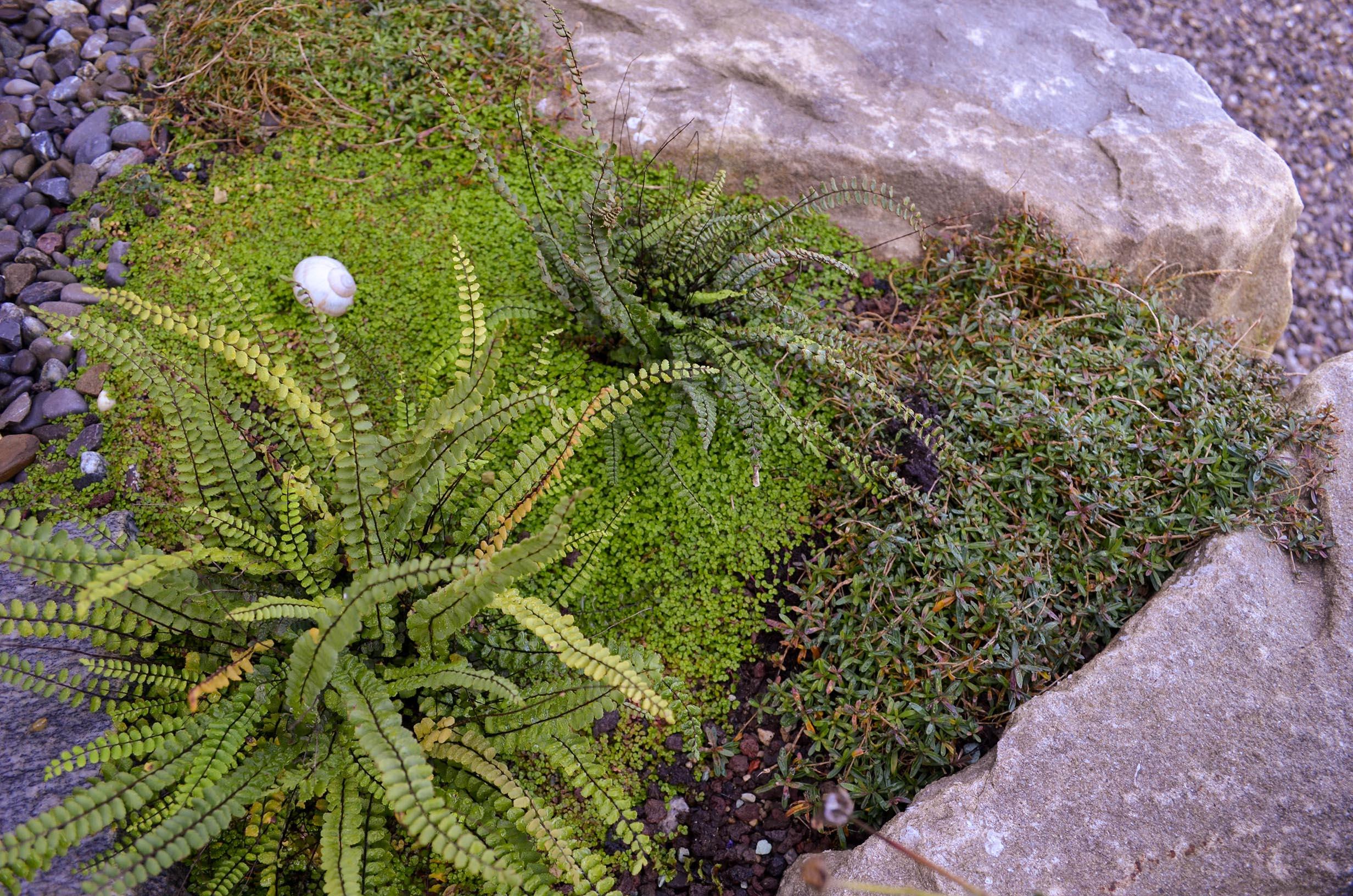 Gartenoase in Buochs 15