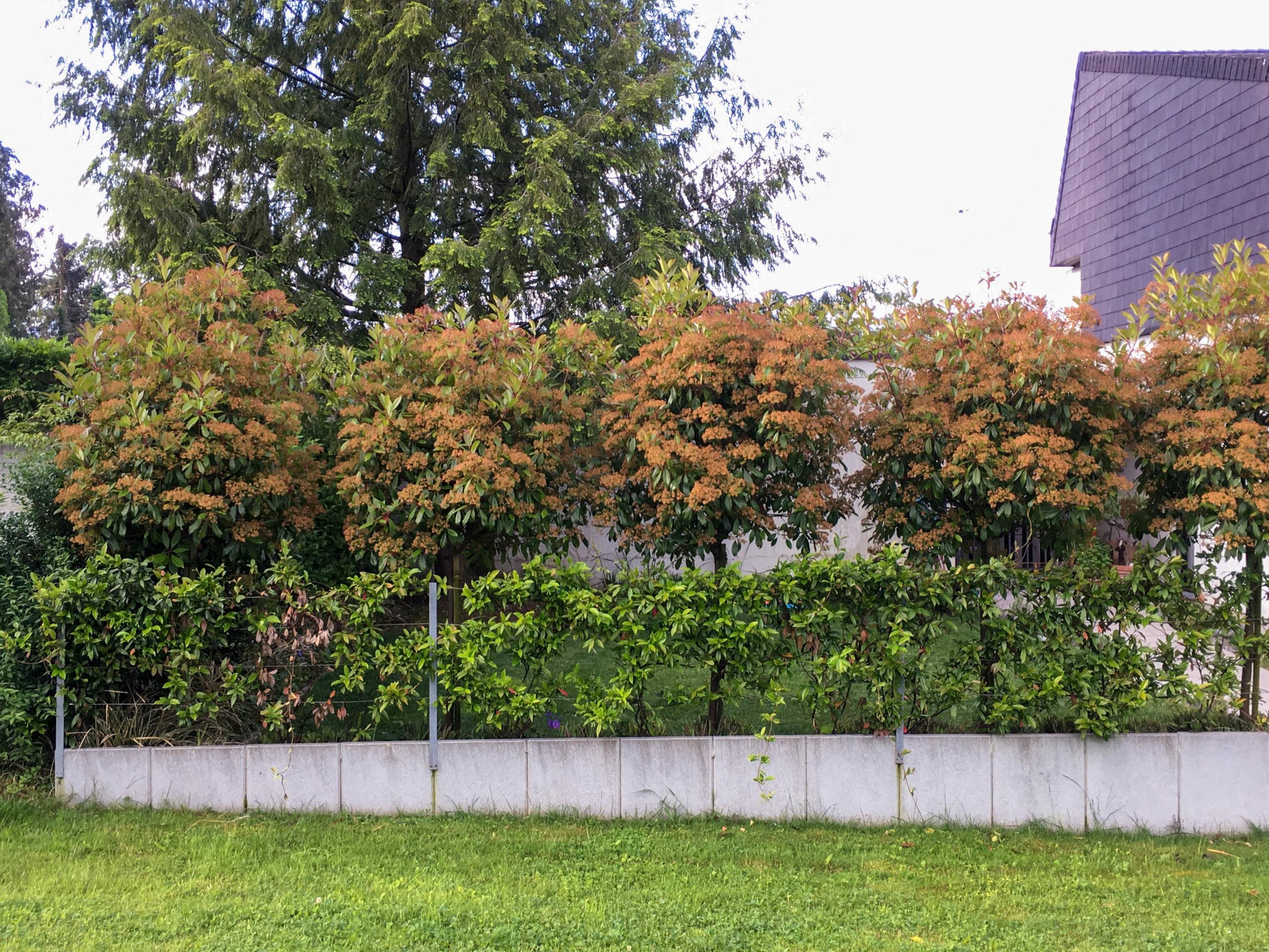 Reihenhausgarten Meggen 07